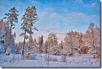 paisajes nevados (98)