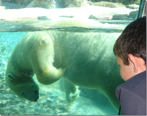 SD Zoo 043A