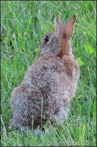 hare0508 (1)