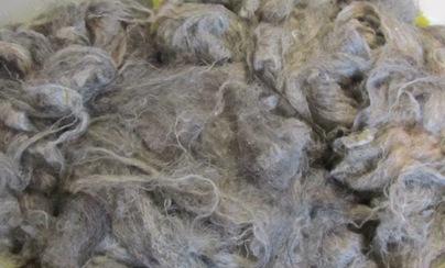 Gewaschene Pommernwolle