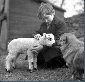 evolução dos Animais segundo o Espiritismo