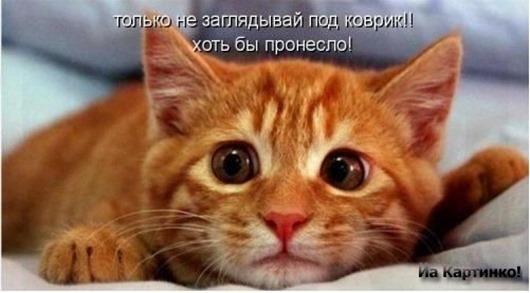83795725_kotuy_prikoluy_20