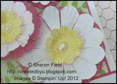 brayered paper daisies and plain paper daisies