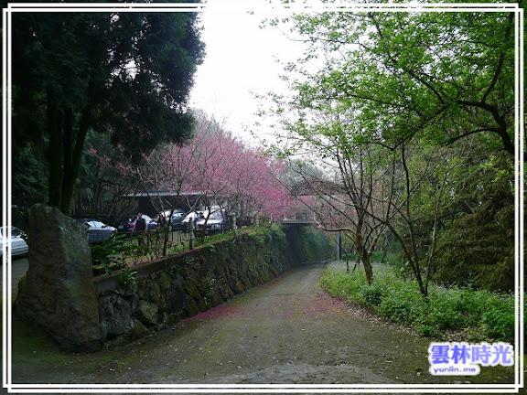 新的賞櫻地點-沐林生態農場(樟湖)