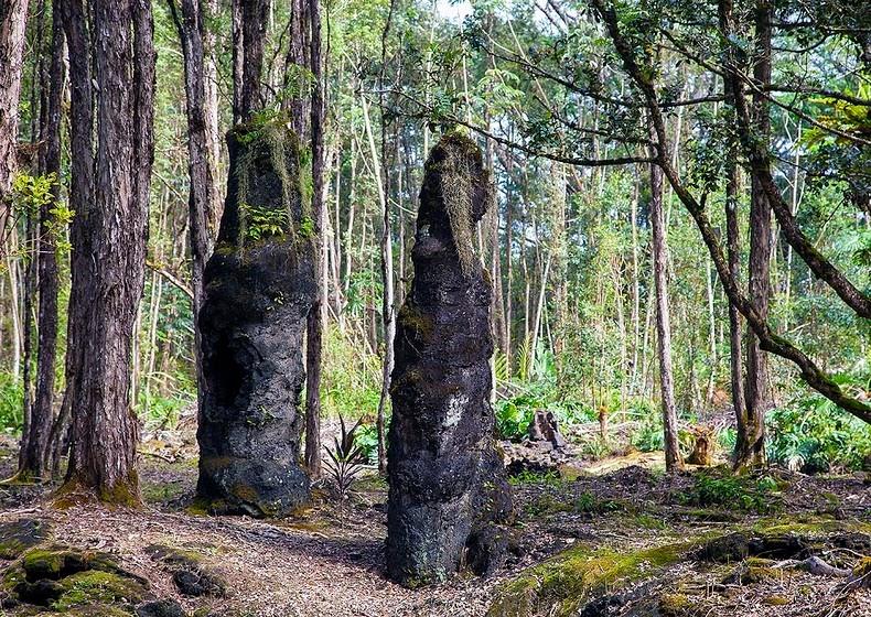 lava-trees-3