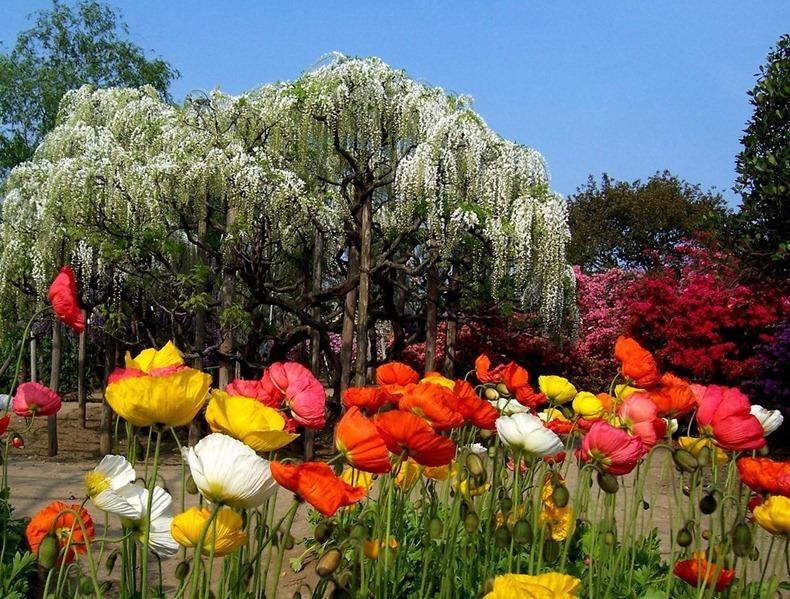 ashikaga-flower-park-12