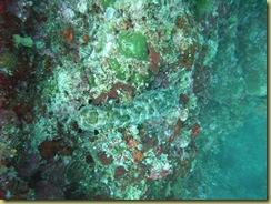 Sea Cucumber 1