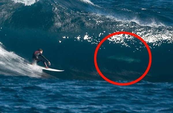 9- Tubarões surfando
