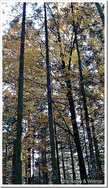 2011_10_29_050_Peternhofwald