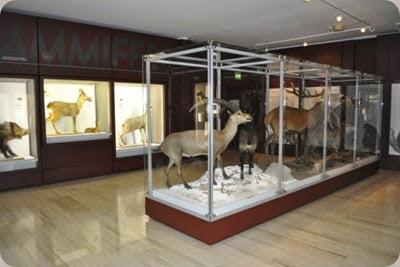 museo_civico_rovereto3