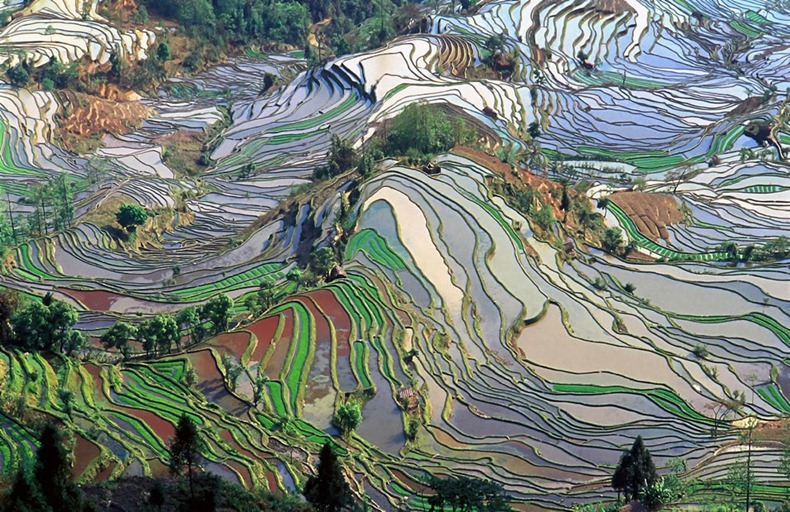 rice-terraces-18