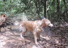 Cães em foco 1 (149)