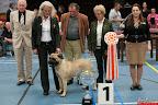 20130510-Bullmastiff-Worldcup-1372.jpg