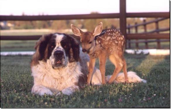 animales (11)