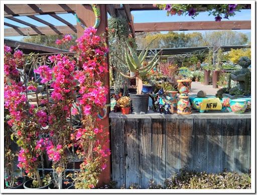 Great 130403_StaBarbara_Terra Sol Garden Center_024