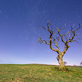 moonlight by Mark Helm - Landscapes Prairies, Meadows & Fields ( stars, trees, long exposure, nightscape )