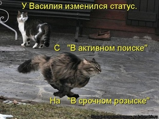 1416587820_kotomatricy-91