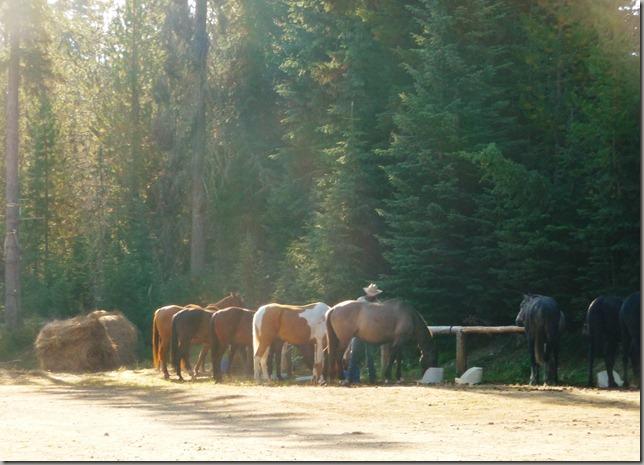 Horse trip 053