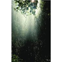drenched forest