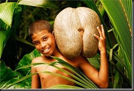 Seychelles_COCO_DE_MER_89880b588c8a4d08bcf31c925e86c0ed