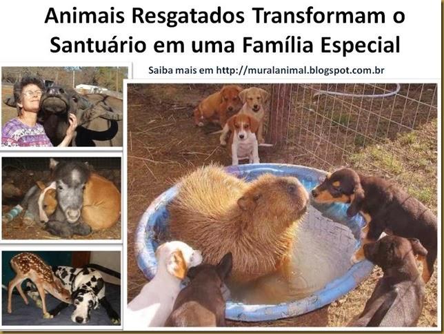 Animais Resgatados Transformam o Santuário em uma Família