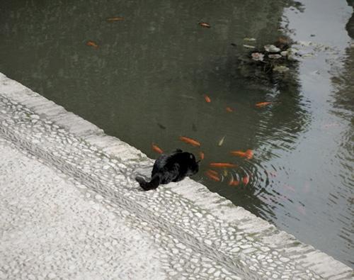 gato-en-estanque-2011-11-20-09-43.jpg