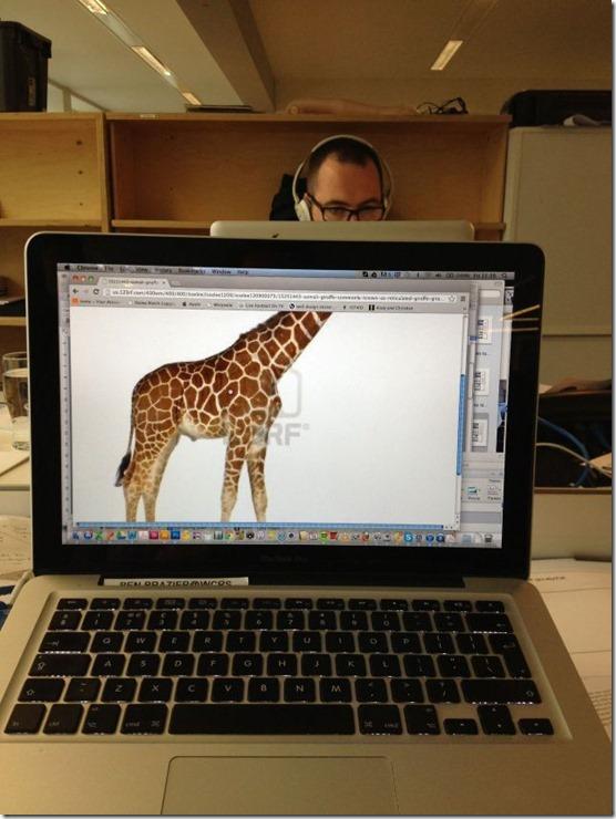 photobomb-coworkers-animal-20