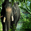 Kumki Latest Movie Gallery 2012