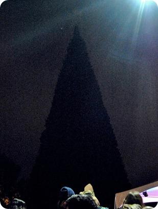 Plano Christmas Tree Lighting 2012 035