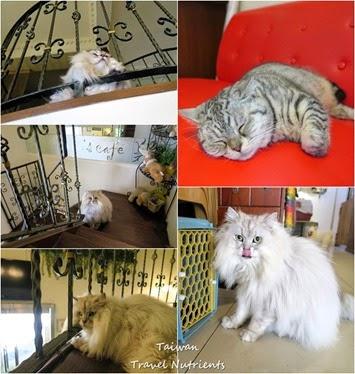 高雄Mona's Cafe, Mona House寵物友善餐廳,民宿 (63)