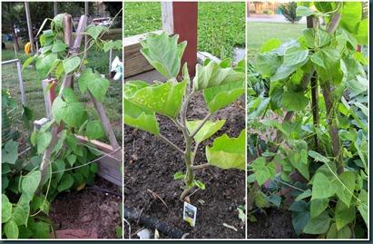 beans-eggplant collage