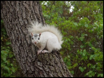 Morning squirrels 042