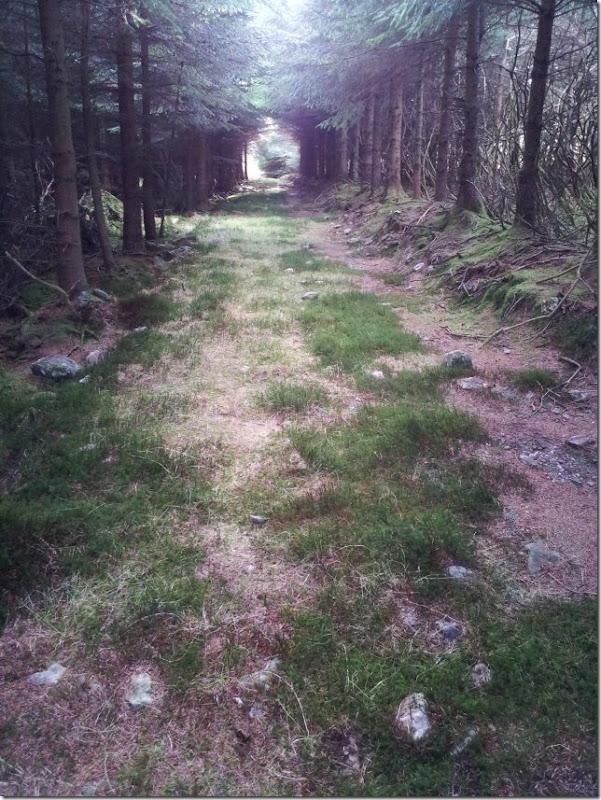 forest walk 7