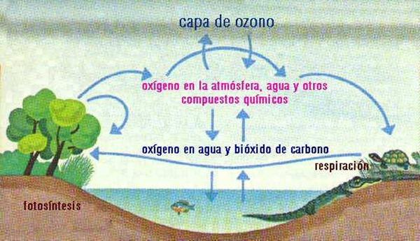 ciclo-del-carbono-y-oxigeno