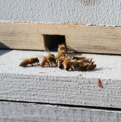 It must be warmer than 55-degrees and I see bees, so I'm not hanging around those hives anymore!