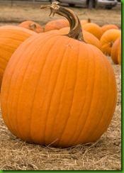 Jack O Lantern Pumpkin1