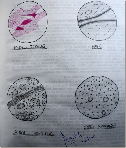 Artifacts on a slide high resolution histology diagram