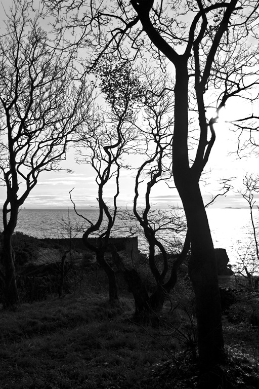 Spooky_Trees_Foto_by_Gareth_Weeks