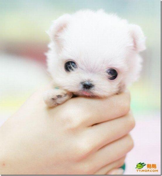 fotos de perritos imagenesifotos.blogspot (6)