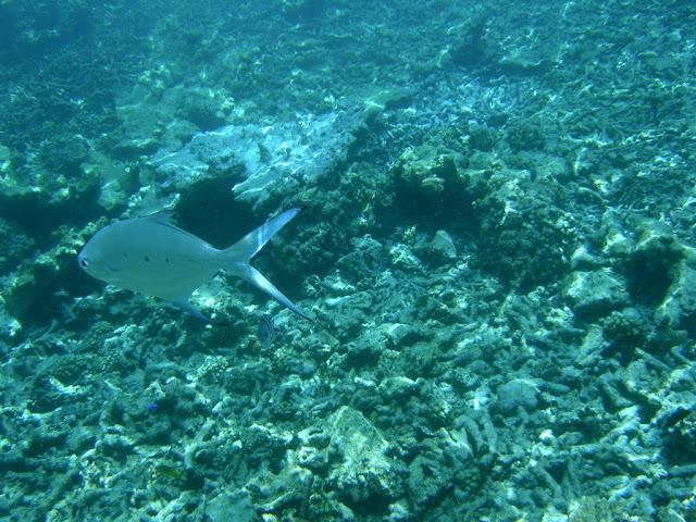 seychelles8_20070412_1760966981.jpg
