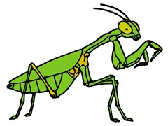 Mantis Clip art for study
