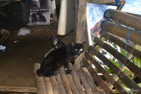 Mang Pirying's black cat and black dog