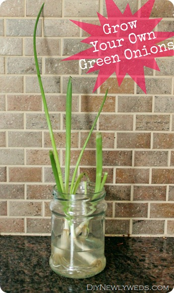 growing-green-onions-in-water