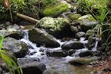 Waiseli Rainforest Preserve - Savusavu, Fiji