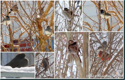 snow birds in tree2