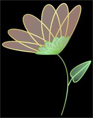 flower-sample-black