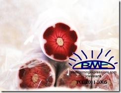 PCC-2011-1005