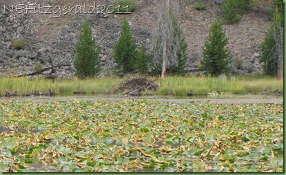 IMG_8929Beaver Lodge_Harlequin Lake