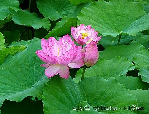 Glória Ishizaka - flores 70