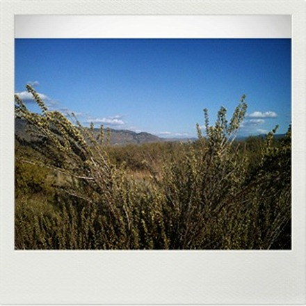 Desert May _Barb Derksen
